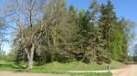 Vaade mälestisele reg nr 13102 lõunast. Foto: Karin Vimberg, 14.05.2012.