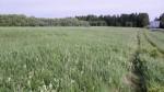 Vaade idapoolsele osale. Foto Silja Konsa 01.06.2012.