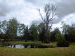 Päärdu mõisa pargi vaade. K. Klandorf 05.06.2012