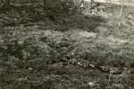 Ohvriallikas - kagust. Foto: O. Multer, 08.05.198...