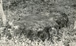 Kultusekivi - idast, E. Väljal, 12.mai 1989