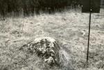 Kivikalmed 18844-18845 lõunapoolne kultusekivi - lõunast, E. Väljal, 1980ndad
