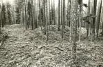 Kääpad reg nr 13453-13484. Foto: M. Pakler, september 1975.