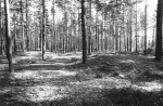 Kääpad reg nr 13541-13571. Foto: M. Pakler, 11.10.1979.