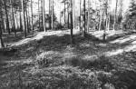 Kääpad reg nr 13541-13571. Foto: M. Pakler, 11.10.1979
