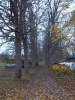 Maidla mõisa pargi allee pargi idaküljel. K. Klandorf 01.11.2011