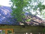 Tagaküljel sirutuvad vahtraoksad liiga katuse kohale, tekkimas sammal. Foto Viktor Lõhmus 06.09.2012