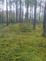 Obinitsa kääbastik. Foto: Ingmar Noorlaid, 24.09.2012.