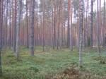 Vaade kääbastele mis sulanduvad metsamaastikku. Foto: Viktor Lõhmus, 12.10.2012.