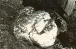 Ohvrikivi - lõunast. Foto: E. Väljal, 03.06.1991.