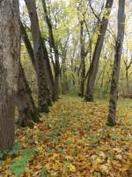 Allee Audla mõisa pargis. Foto: Rita Peirumaa. 14.10.13