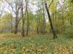 Vaade Audla mõisa pargile. Foto: Rita Peirumaa. 14.10.13