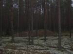Põhjapoolse osa kääbas, ümmargune. Foto: Viktor Lõhmus, 20.11.2013.