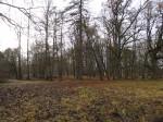 15745 Arkna mõisa park. Foto: Anne Kaldam 15.11.2013