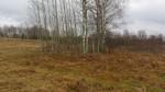 Kivikalme reg nr 13195. Foto: Ingmar Noorlaid, 09.01.2014.