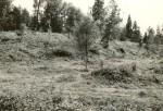 Varbola linnamägi, valli sisekülg - kagust. Foto: E. Väljal, 13.08.1985.