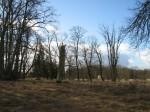 Vaade pargile lõuna suunas  Autor Kalli Pets  Kuupäev  14.02.2008