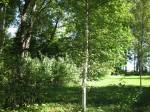 Kärde mõisa park. Pargiaas Foto: Sille Raidvere Aeg: 17.09.2014