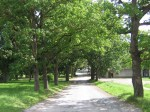 Vohnja mõisa park : 15693 VAADE teelt alleele  Autor Anne Kaldam  Kuupäev  19.08.2008