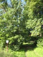 Audla mõisa park. Sissesõit. Foto: Rita Peirumaa. Kuupäev  04.09.2008