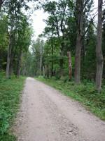 Allee  Autor Sille Raidvere  Kuupäev  16.09.2008