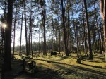 Vaade kalmistu keskpaigast lõuna suunas. Foto: Keidi Saks, 07.02.2017