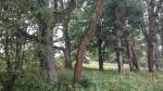 Kuremaa mõisa park. Vaade lõunast põhjasuunda piki Järve tänavat. Foto: Sille Raidvere Aeg: 19.09.2017