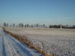 Kuremaa mõisa pargi allee Kuremaa- Laiuse allee, vaade alleest lääne poolselt mäelt Foto: Sille Raidvere Aeg: 16.01.2018
