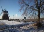 Kuremaa mõisa pargi allee Kuremaa- Laiuse allee, vaade kagust tuuleveskile Foto: Sille Raidvere Aeg: 16.01.2018