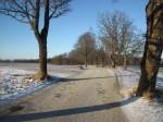 Kuremaa mõisa pargi allee Kuremaa- Laiuse allee. Allee katked mäe peal, tuuleveski juures.  Foto: Sille Raidvere Aeg: 16.01.2018