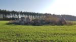 Põllukivihunniku all olev kivikalme, vaade läänest. Foto: M.Abel, kp 16.10.18