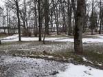 Udriku mõisa park. Foto: Raili Uustalu 07.12.2018. Vaade esiväljaku puudele.