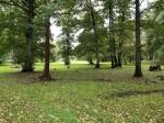 Viimsi mõisa park. Foto: Raili Uustalu 02.10 2019. Liigniiske ala pargi ida-ja kagupoolses osas.