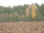Vaade lohukivile Jõgisoo-Prümli teelt.