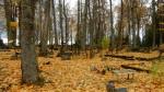 Vara kalmistu. Foto autor I. Raudvassar 17.10.2017