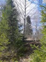 """Ohverdamiskoht """"Hiiemägi"""" Vedruka külas, vaade idast. Foto: K. Klandorf 04.04.2020."""