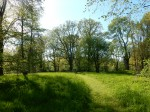 Suure-Kambja mõisa park, 19. saj. Foto autor I. Raudvassar 27.05.2020.