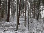 Vaade kagust kalmistu mäe peal kasvavas metsas. Foto: Pikne Kama, 23.12.2020