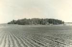 Tõrma hiiemägi läänest. Foto: H. Joonuks, 1976.
