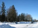 Vaade vana kalmistu poolt enne puude eemaldamist Kalli Pets, 15.03.2010