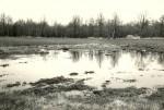 Ohverdamiskoht - kagust. Foto: E. Väljal, 04.05.1983. (Muinsuskaitseameti arhiiv).