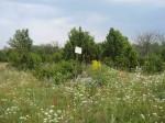 Vaade kivikalmet muust karjamaast eraldavale põllupeenrale kivikalme tähisega. Foto: M. Koppel, 22.07.2010.