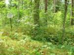 Vaade kalmistu alale ning tähisele Tõkke tallu viivalt teelt. Foto: Karin Vimberg, 08.07.2010.