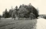 Maa-alune kalmistu - lõunast. Foto: M. Pakler, 14.05.1987.