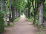 Tapa linna kalmistu, reg. nr 5789. Foto: I. Raudvassar, kuupäev 16.08.2005