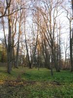 Väimela mõisa park. Foto Tõnis Taavet, 26.10.2010.