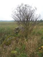 Lohukivi reg nr 10469. Foto: Tõnno Jonuks, 14.09.2010.