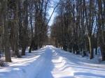 Arkna mõisa park, 15745  vaated pargis , vaade alleele, Narva nmt poolt mõisa poole  autor:Anne Kaldam aeg: 10.02.2011