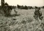 pilt - Kivikalmed - kirdest, E. Väljal, 30.mai 198
