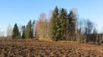 Vaade mälestisele Käätso-Rõuge-Luutsniku teelt, st idast. Foto: Karin Vimberg, 15.11.2011.